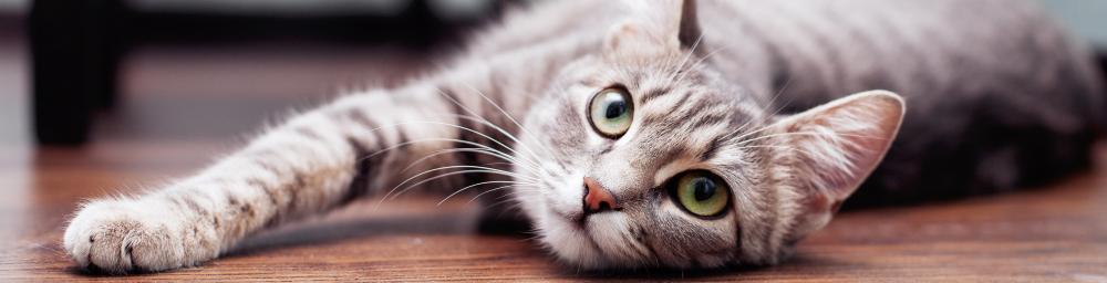 ネコちゃんに注意してあげたいこと