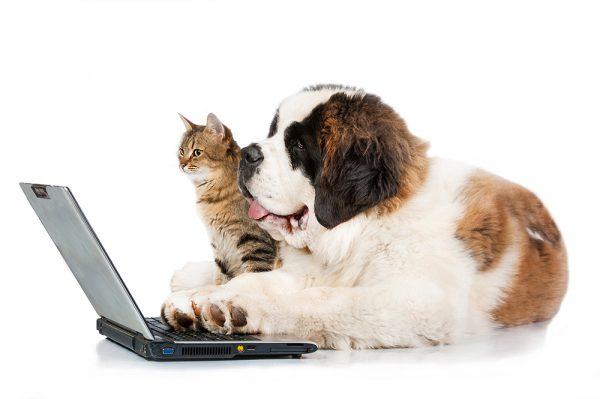 犬・猫の腎不全についてサムネイル