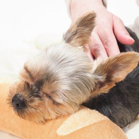もしかして病気が原因?食欲があるのに痩せる犬について詳しく解説サムネイル